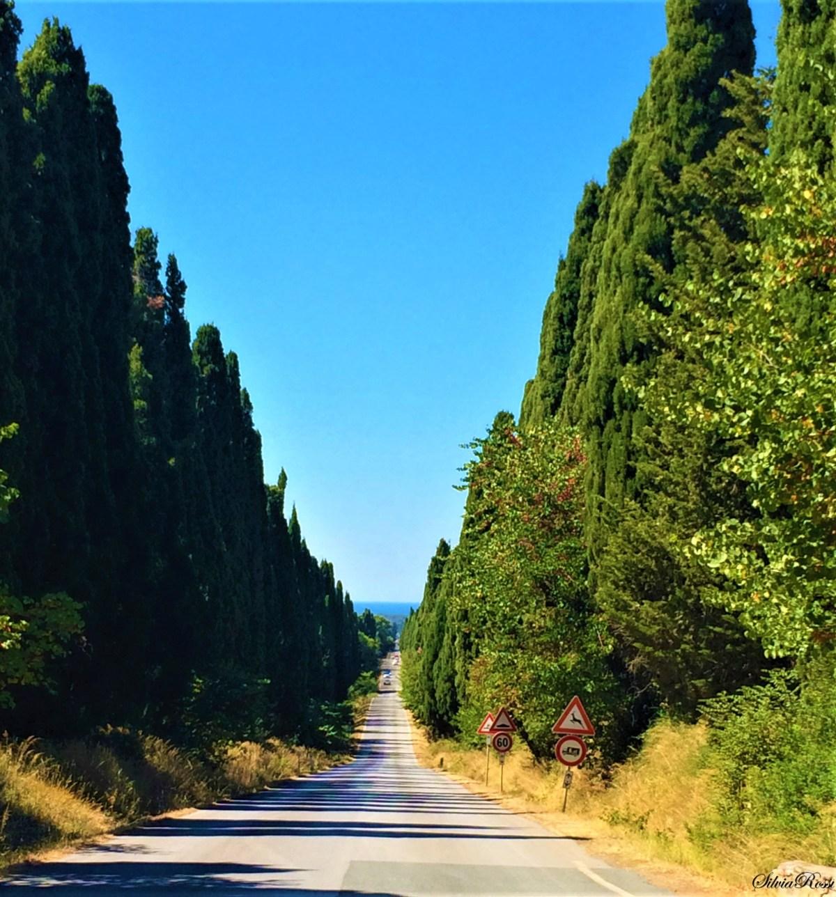 Bolgheri vino e poesia, grandi classici