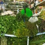 erbe aromatiche varie colombiane