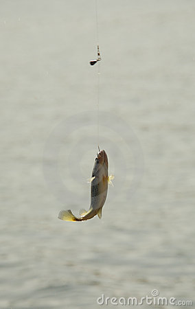 the fish elizabeth