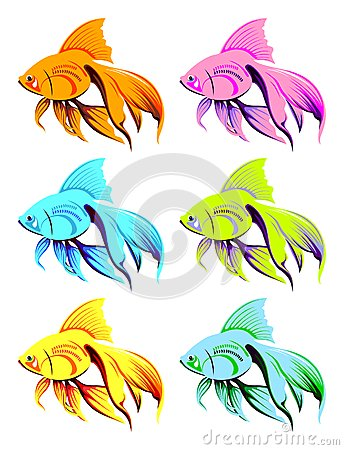 Multicoloured goldfish