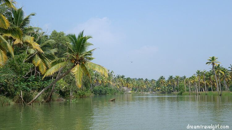 India_Kerala_Poovar_backwaters13
