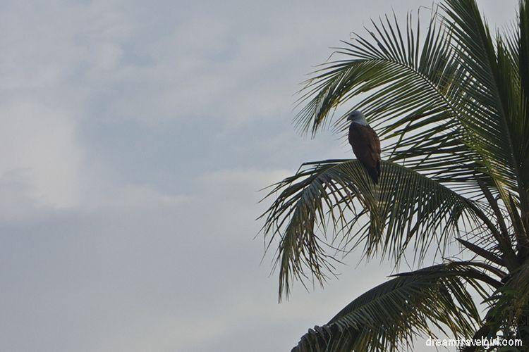 Bird (eagle?)