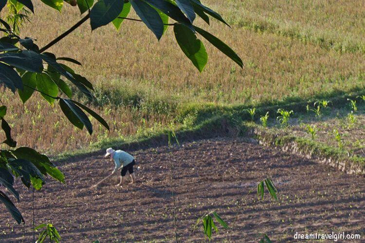 Laos_Luang_Namtha_rice-fields08