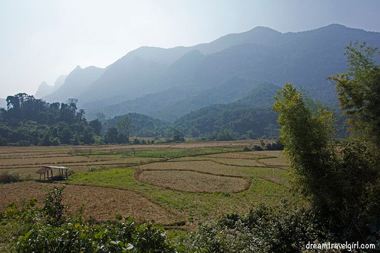 All around us: mountains and rice fields
