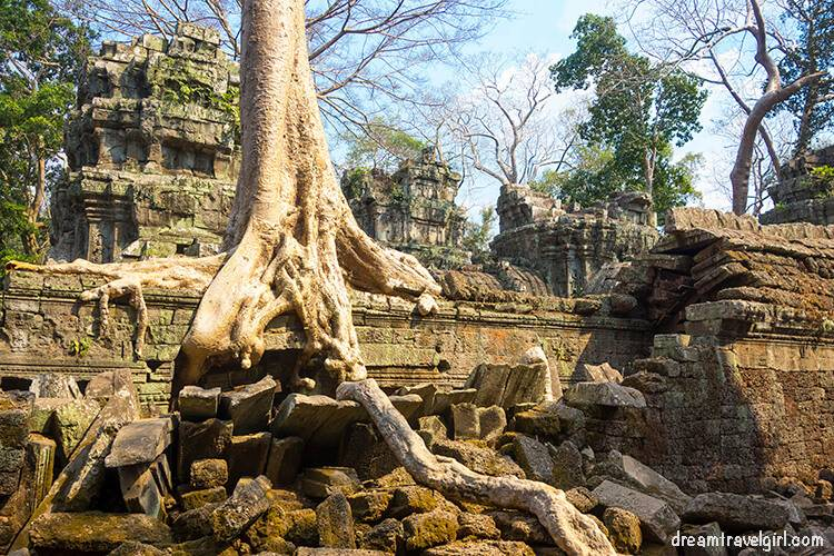 One of the trees in Ta Prohm temple