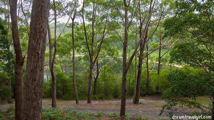 Australia_Jervis-Bay_ National-Park_forest