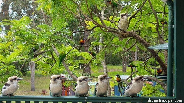 Australia_Jervis-Bay_ native-birds1