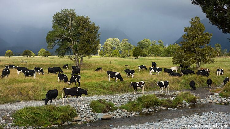 New-Zealand_Fox-village_lake-Matheson04