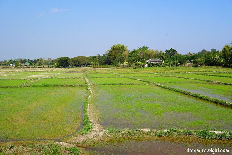 Paddy fields near Phrao