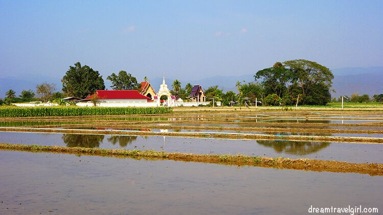 Temple and paddy fields on the way to Chiang Dao