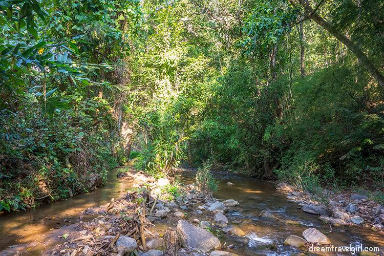 Jungle trekking: the jungle