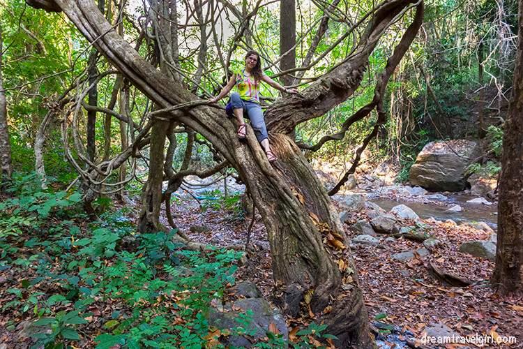 Jungle trekking: climing a tree