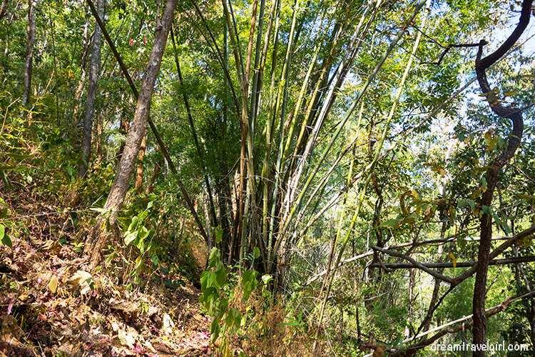 Jungle trekking, going put he mountain