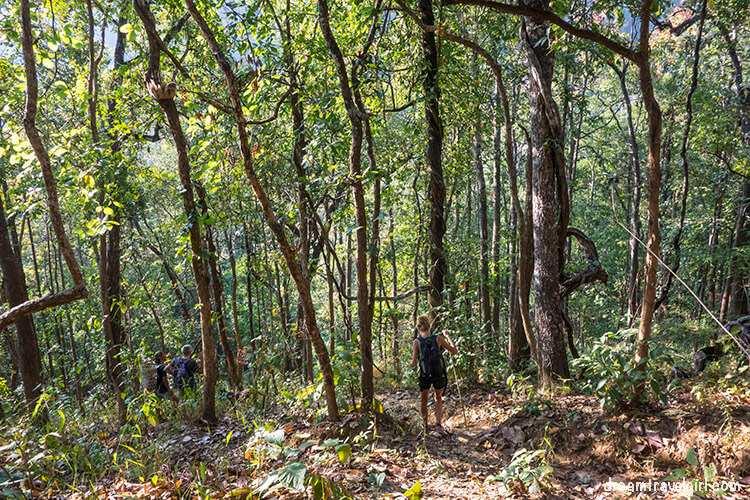 Jungle trekking, way down
