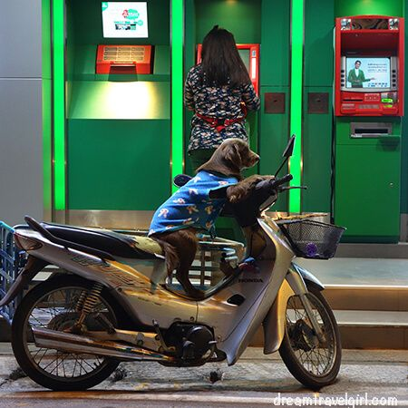 Mae Sariang: dog on a motorbike