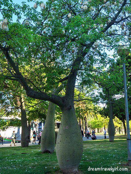 Pear-shaped trees