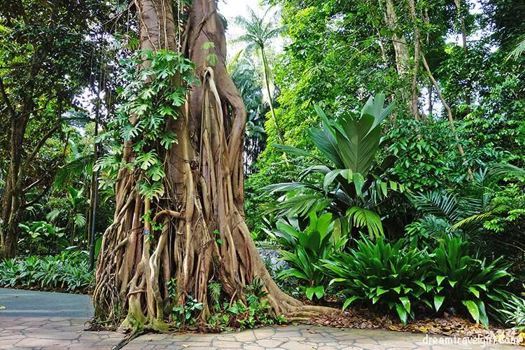 Botanical Gardens, Singapore