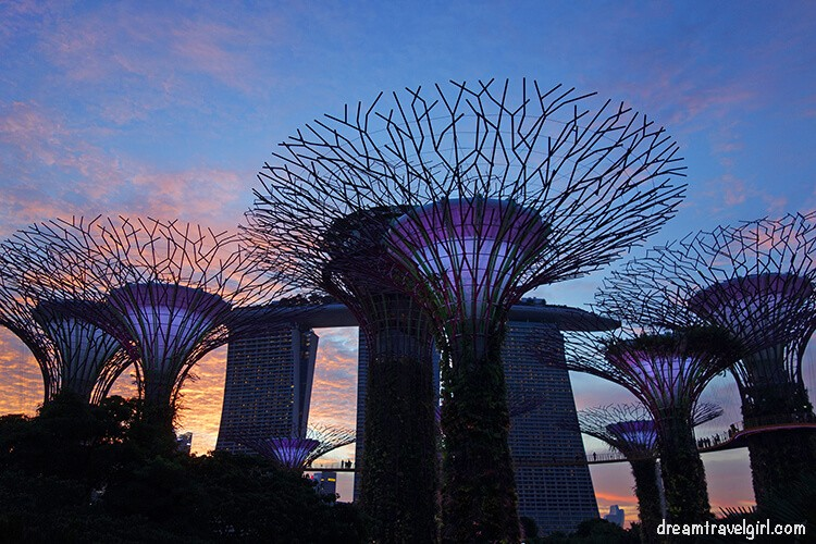 Mangrove super trees, Gardens by the Bay