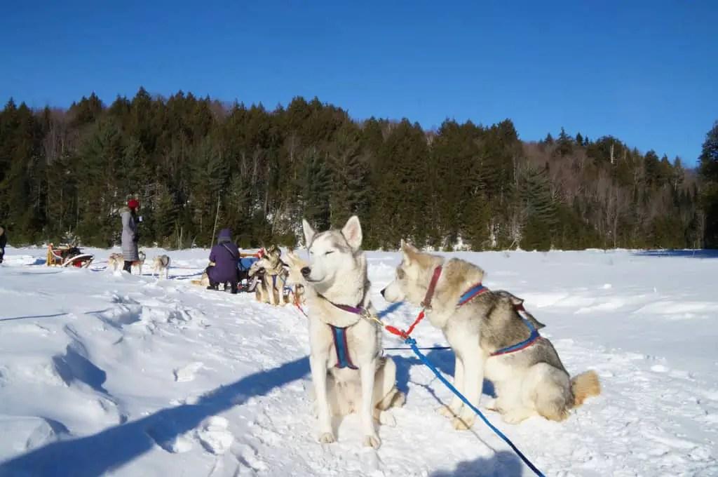 Winterdance-dog-sled-tour-break_05