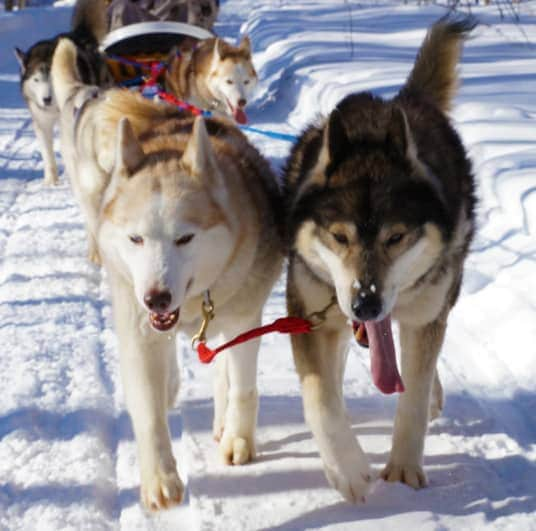 Winterdance-dog-sled-tour-riding the trails