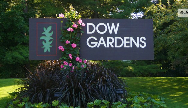 Catching the Last Blooms of the Season in Dow Gardens Midland Michigan
