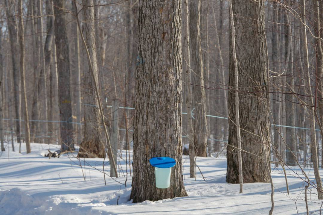 Take a Sweet Road Trip on the Tap Into Maple Trail in Ontario's Lake Country