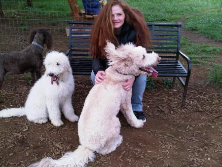 Me and the Goldendoodles