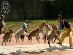 13 Pups Set World Record for Most Dogs Skipping Rope at Once [VIDEO]