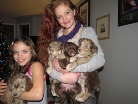 Me and our last litter of Chocolate and Merle Aussie Labradoodles