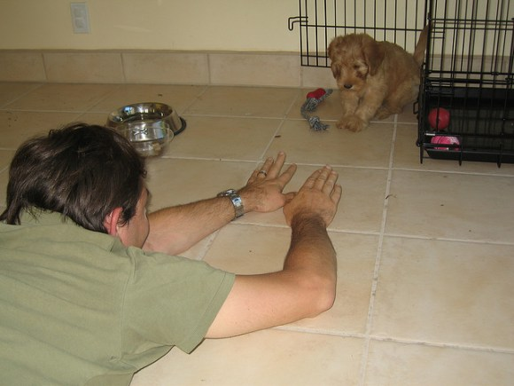 CRATE TRAINING A LABRADOODLE