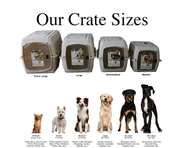Shipping Puppies How To Ship Your Pet Aussiedoodle And Labradoodle Puppies Best Labradoodle Breeders In Washington State Portland Oregon