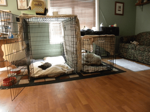 My dogs and crates
