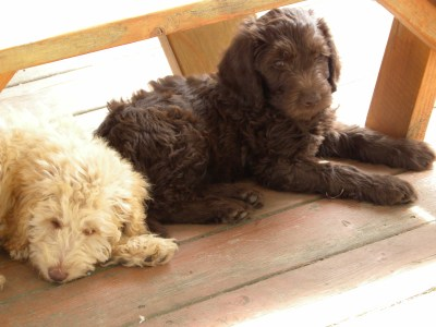 Two of our Puppies!