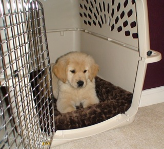 Puppy-in-Crate-FirstNight2