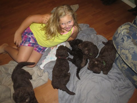 Olivia and the puppies