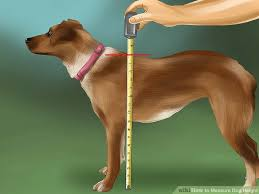 Measuring your dogs height how to