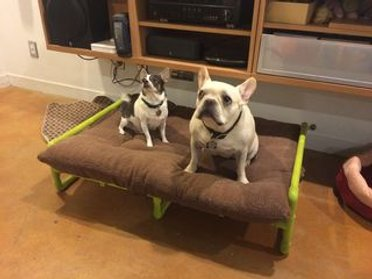 DIY PVC ELEVATED DOG BED