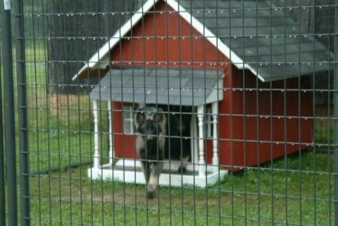 Industrial Strength Dog House