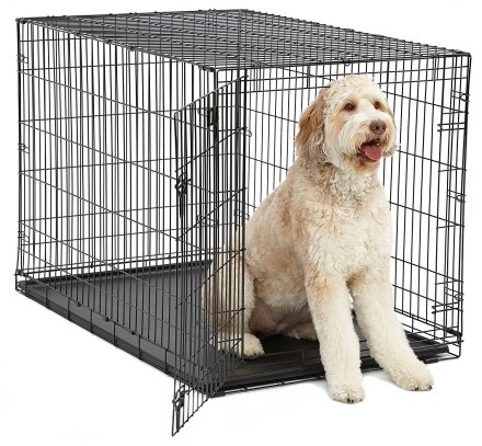 Midwest I-crates 48 inch Crate for Large Standard Goldendoodles, Labradoodles and Aussiedoodles