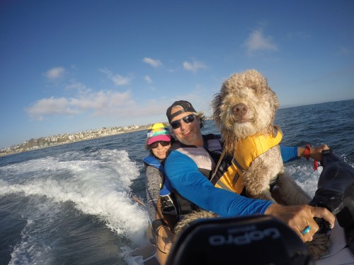 Aussiedoodle Kula and owner Syd on a wave runner