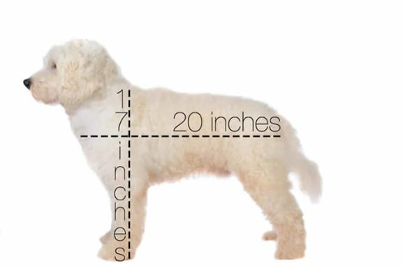 DREAMYDOODLE SIZES AND HEIGHTS GRAPHIC - MEDIUM