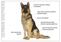 Problems common with Pure Bred Dogs - The German Shepherd