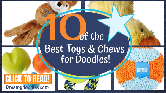 10 OF THE BEST TOYS AND  CHEWS FOR DOODLE PUPPIES POST BANNER