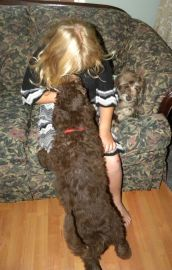 Red Girl giving kisses to Olivia - F1B Labradoodle