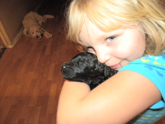 F1b Black Goldendoodles - Newborn being held by my 7 year old daughter Olivia