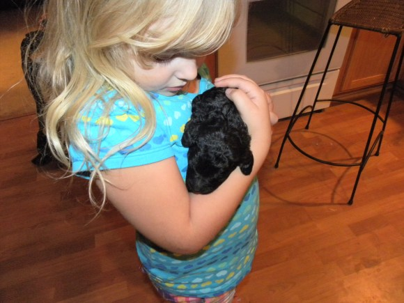 Week Old English Goldendoodle Puppy being held by Olivia - Early Puppy Handeling and Socialization