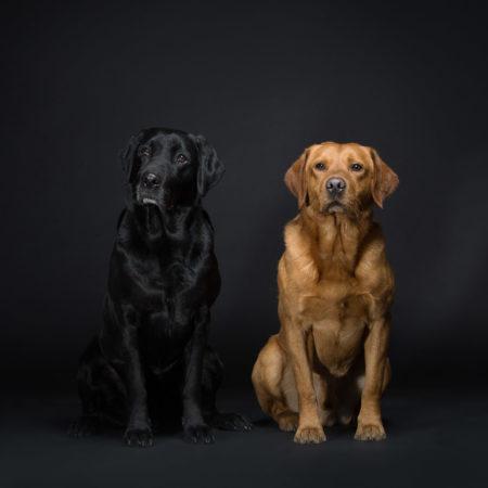 Hundefotografie Creactive Koepfe