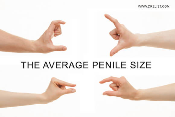 The Average Penile Size Image