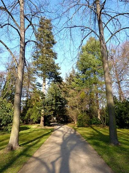 Waldweg im Großen Garten