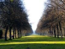 Allee im Großen Garten Dresden